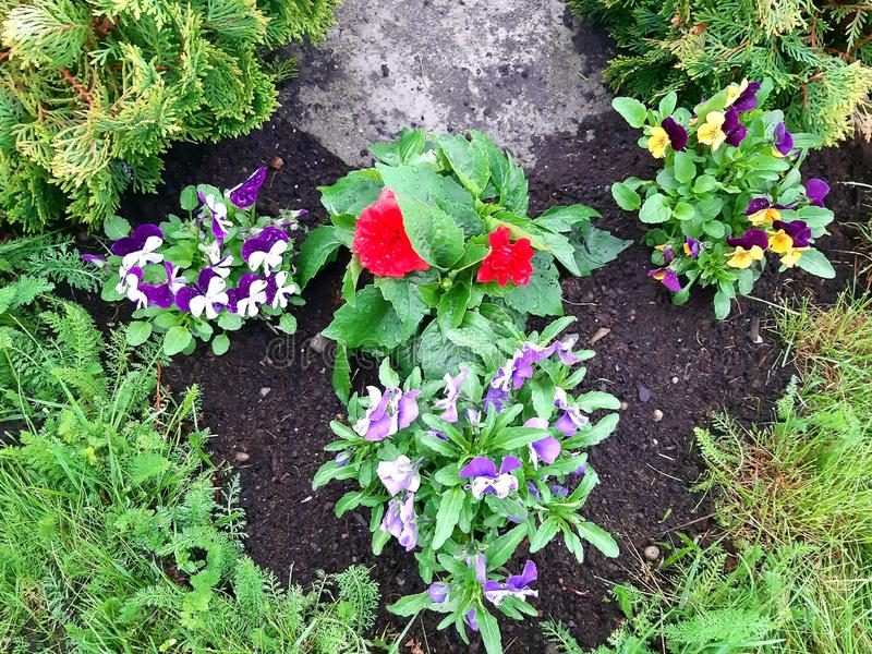 A flowerbed in green, yellow,blue and red royalty free stock photo