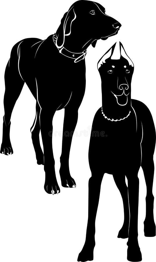 Doberman di Kurzhaar illustrazione di stock