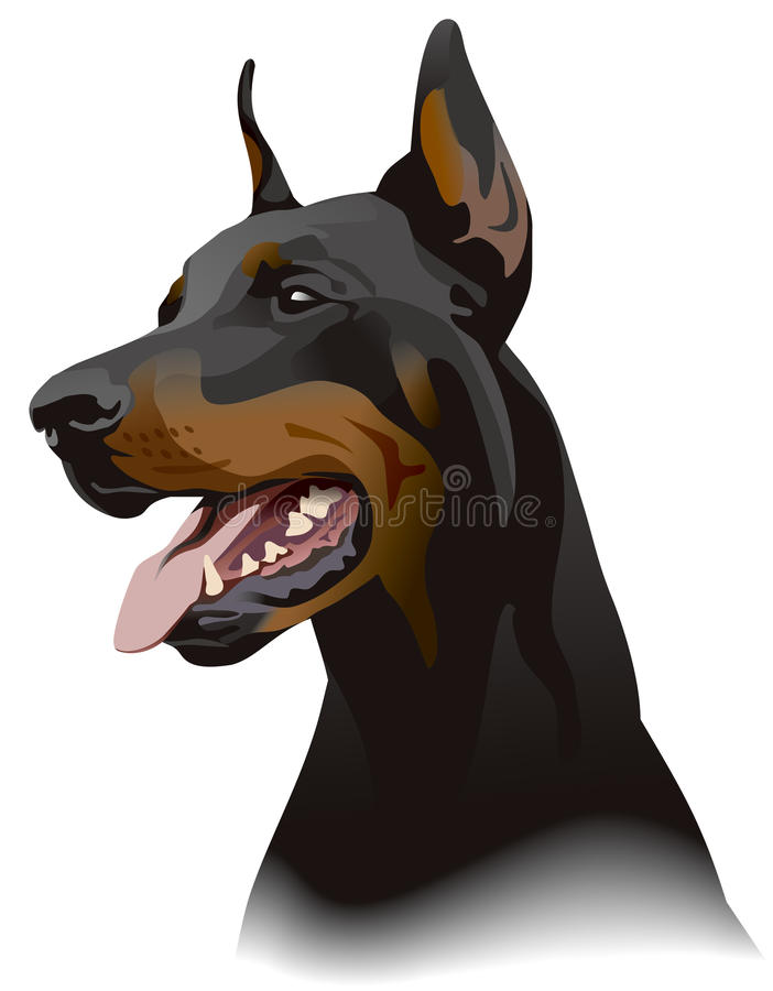 Doberman dog. Illustration. Doberman dog vector illustration for best prints and other uses royalty free illustration