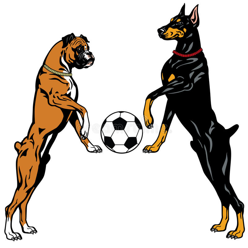 Doberman och boxare stock illustrationer