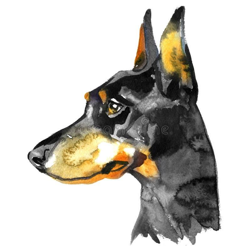 Doberman zwierzęcia psa akwareli ilustracja odizolowywająca na białym tle ilustracja wektor