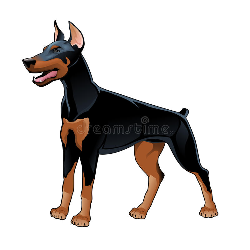 Download Dobermann Pinscher. stock vector. Illustration of aggressive - 34647340