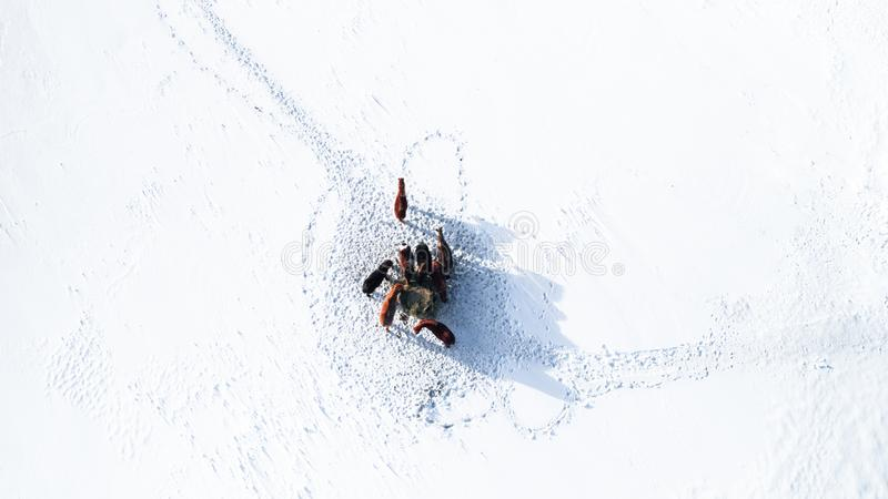 Dobiera się few konie stoi wpólnie w białym zima śniegu zdjęcia stock