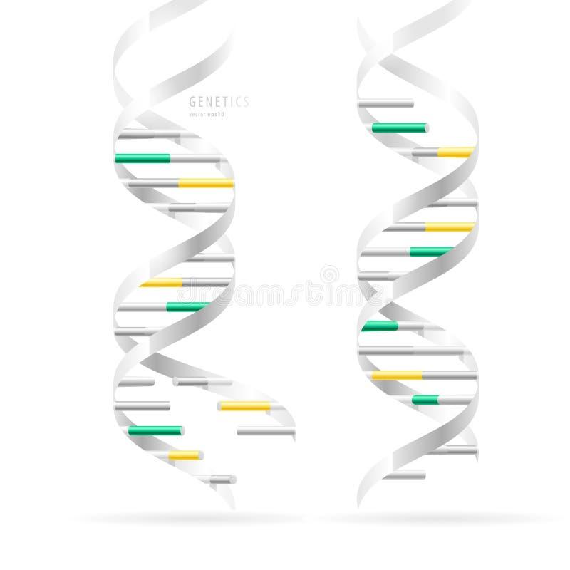 Doble hélice de la DNA, modelos estructurales realistas, aislados en blanco libre illustration