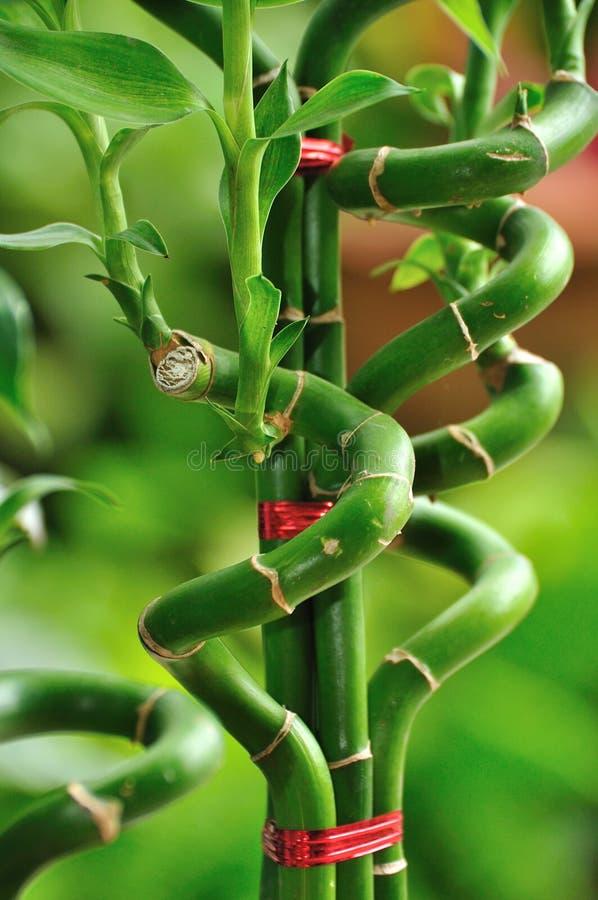 Dobra de bambu imagens de stock royalty free