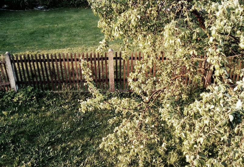 Dobry drzewo fotografia stock