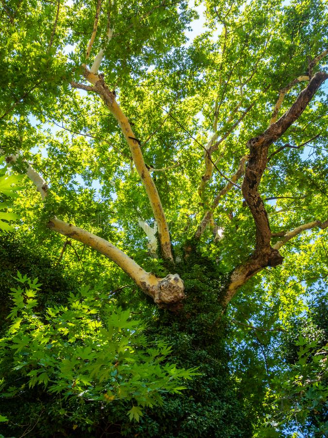 Dobry odpoczynek pod cieniem ogromny stary płaski drzewo w mieście Edessa, Grecja fotografia stock
