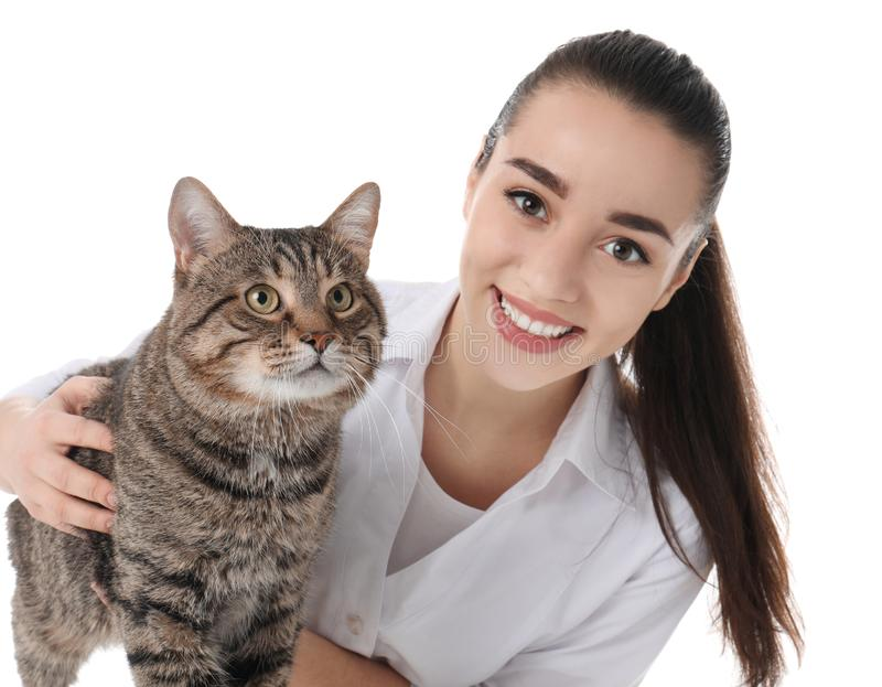 Doc. de vétérinaire avec le chat sur le blanc photo stock