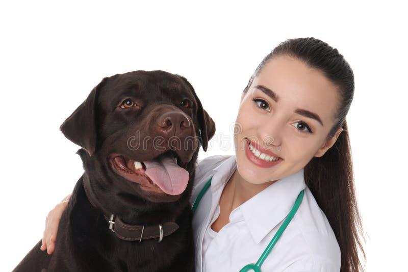 Doc. de vétérinaire avec le chien sur le blanc photos stock