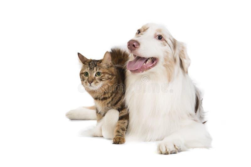 Doc. et chat photos libres de droits