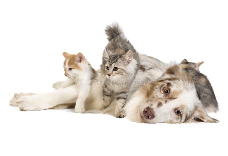 Doc. et chat photo libre de droits