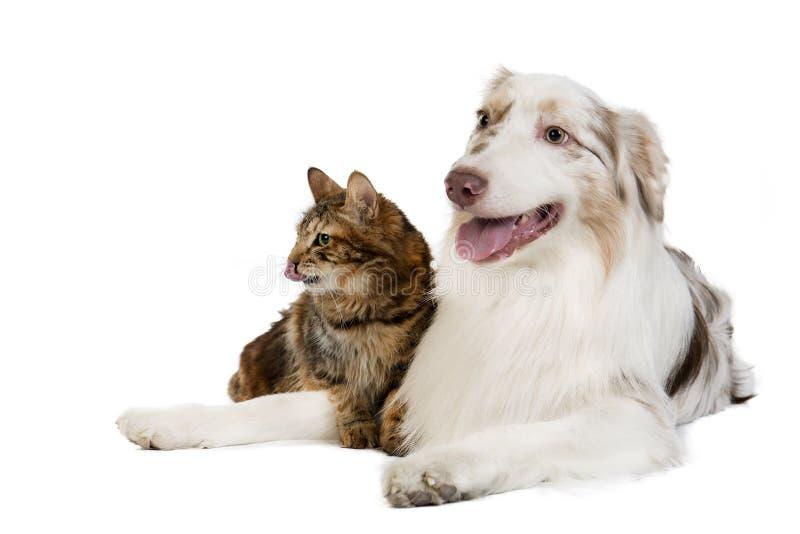 Doc. et chat photographie stock libre de droits
