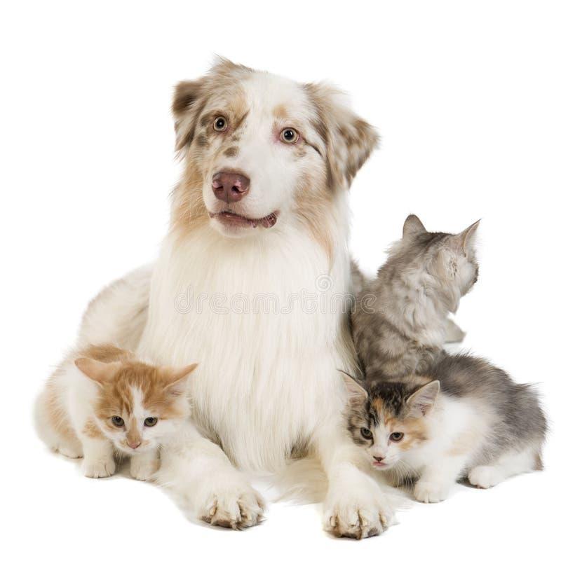 Doc. et chat images libres de droits