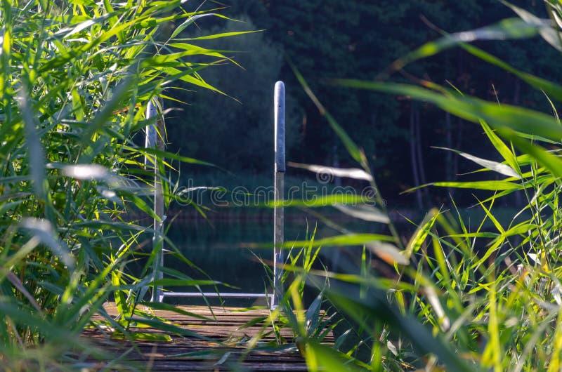 Doca pequena no lago com juncos imagens de stock royalty free