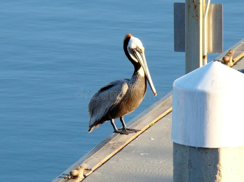 Dock Side stock photography