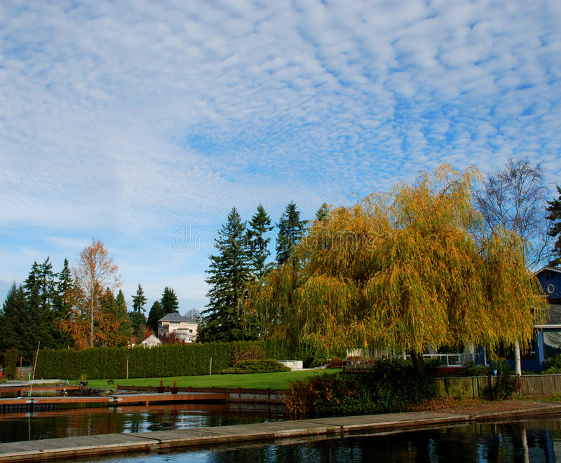 Download Dockside homes stock image. Image of leaves, trees, pier - 7214663