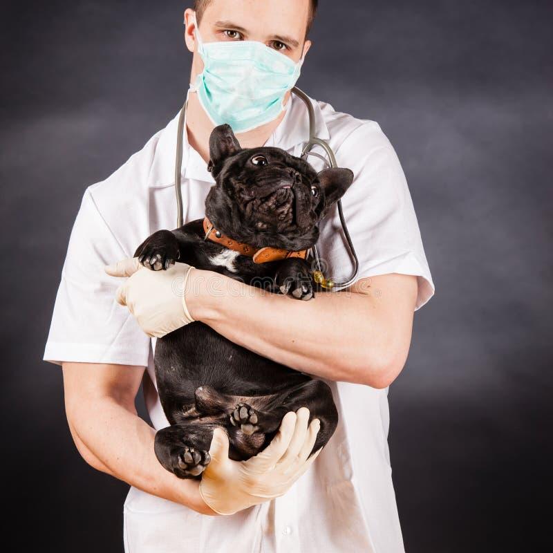 Docteur animal photos libres de droits