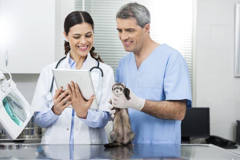 Docteur With Tablet Computer par le collègue tenant la belette images libres de droits