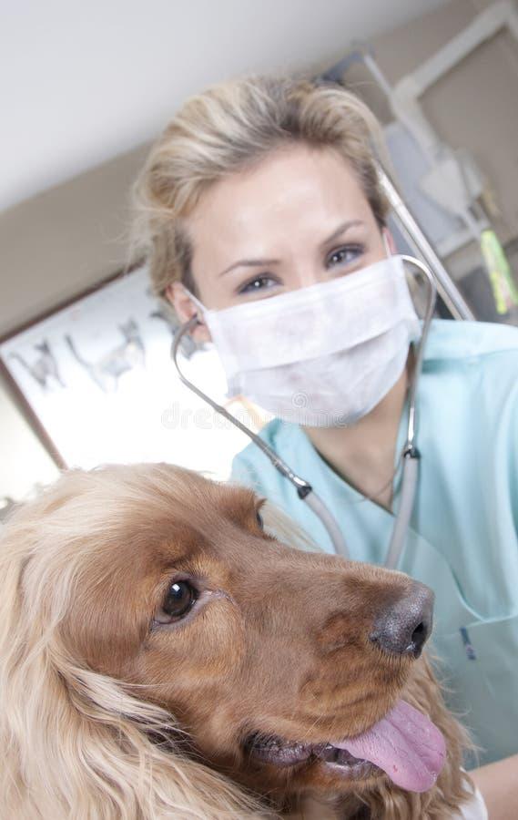 Docteur vétérinaire images libres de droits
