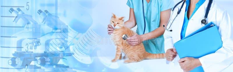 Docteur vétérinaire avec le chat dans la clinique vétérinaire images stock
