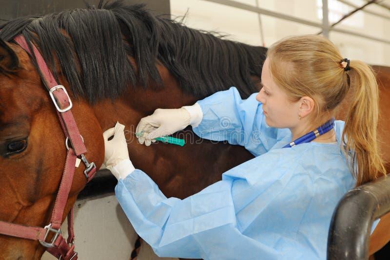 Docteur vétérinaire avec le cheval photos libres de droits
