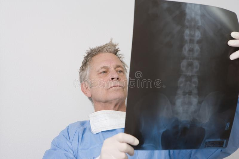 Doctor Analyzing X-Ray Report. Senior male doctor analyzing x-ray report in clinic royalty free stock photo