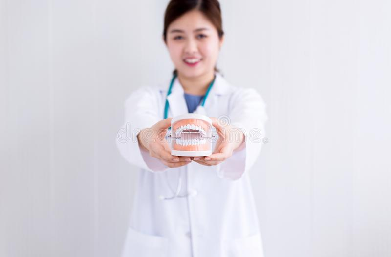 Doctor asian woman holding plastic teeth model,The concept of oral and dental health stock image