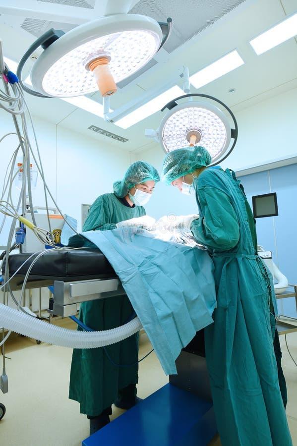 doctor de dos veterinarios que trabaja en sala de operaciones fotografía de archivo
