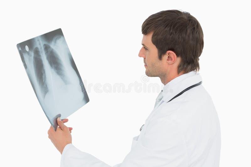 Doctor de sexo masculino concentrado que mira la imagen de la radiografía de pulmones fotografía de archivo