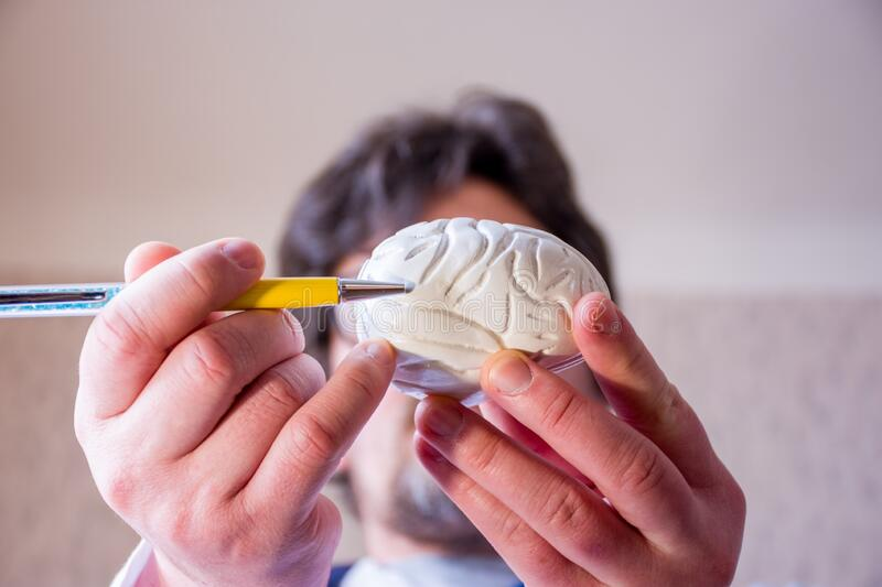 Doctor on defocused background holds in his hand anatomic model of human brain, pointing with pen in hand on brain in foreground. Localizing pathology, illness stock images