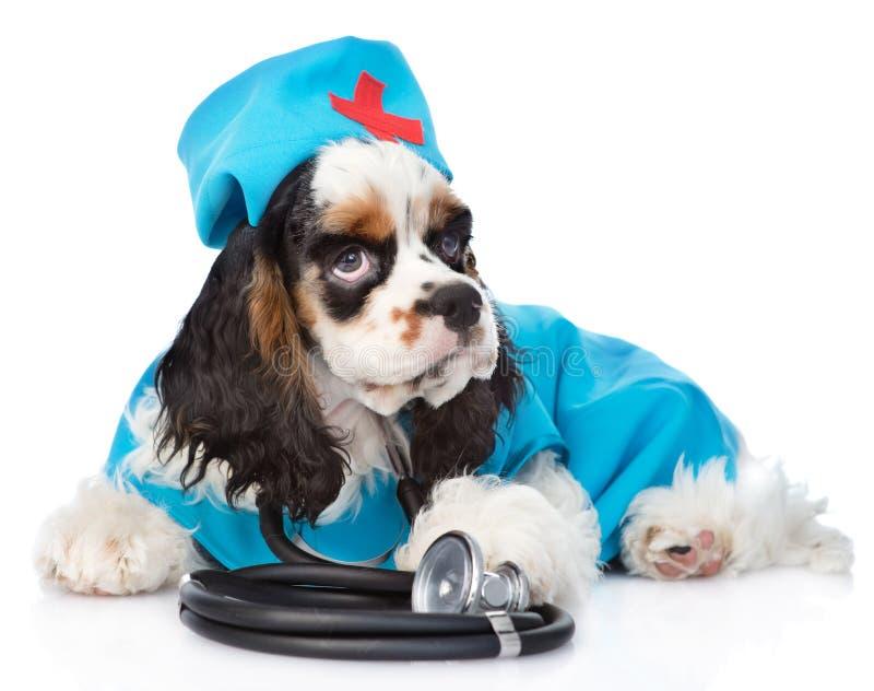 Doctor del sombrero del perrito de cocker spaniel que lleva con el estetoscopio en el suyo imagen de archivo