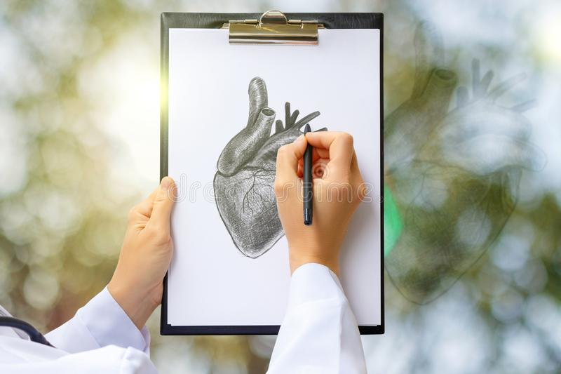 Doctor draws a sketch of the human heart . royalty free stock images