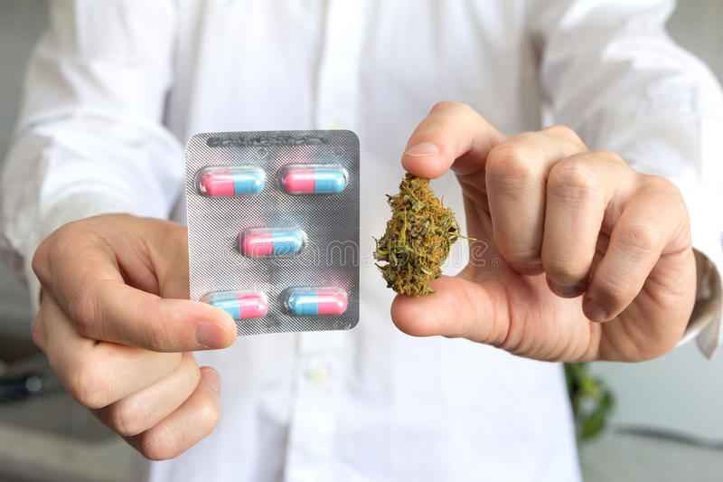 Doctor hand holding bud of medical cannabis and pills. Doctor hand offering bud of medical cannabis and pills. Concept of choise of traditional medications and royalty free stock image
