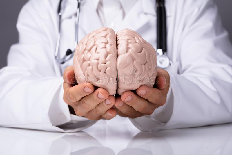 Doctor In Holding Human Brain Model royalty free stock photo
