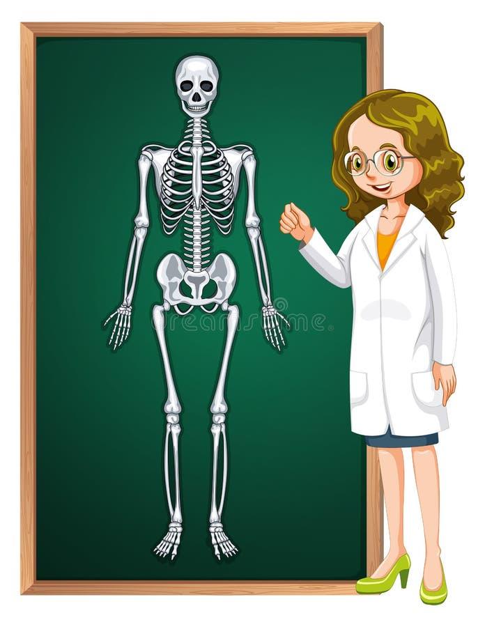 Doctor and human skeleton on board stock illustration