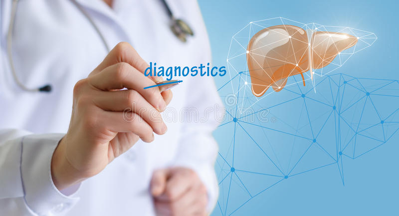 Doctor makes diagnosis of the liver. stock images