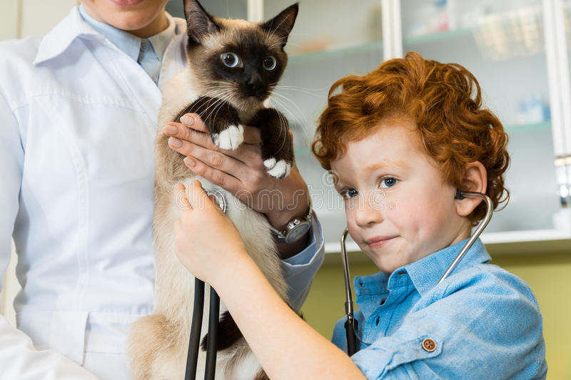 Doctor with red haired boy ausculting cat with stethoscope stock photography