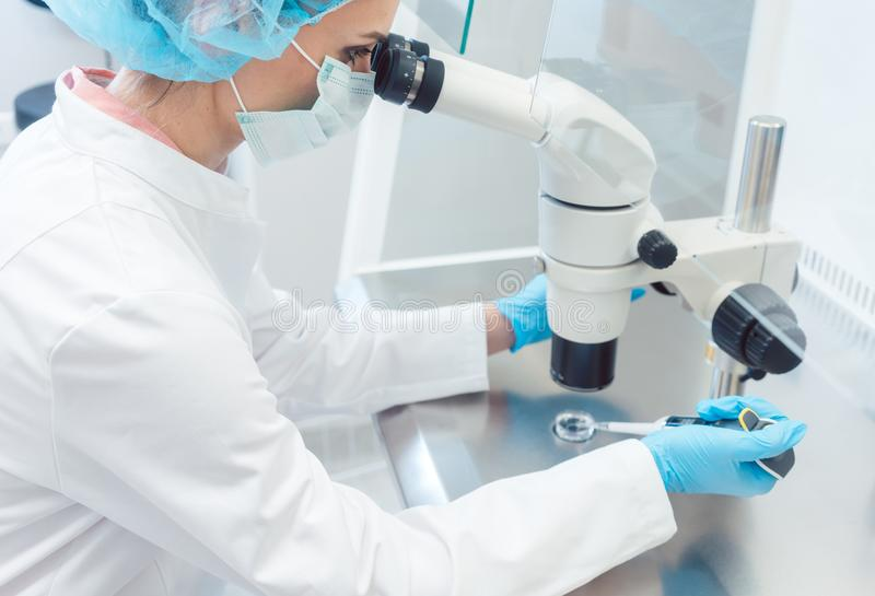 Doctor or scientist working on biotech experiment in laboratory. On microscope royalty free stock photo