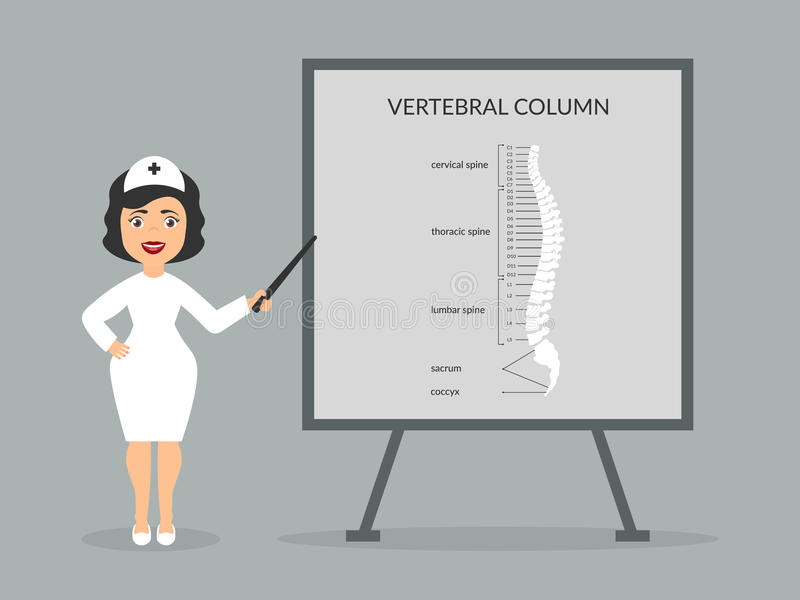 The doctor shows the structure of the vertebral column. Surgeonon or neurologist presentation. Vector in flat design. The doctor shows the structure of the royalty free illustration