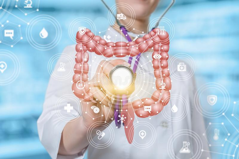 A doctor touching the medical system structure with the intestines model with a stethoscope vector illustration