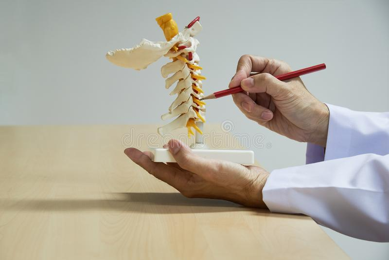 Doctor demonstrate anatomy of cervical spine model royalty free stock photography