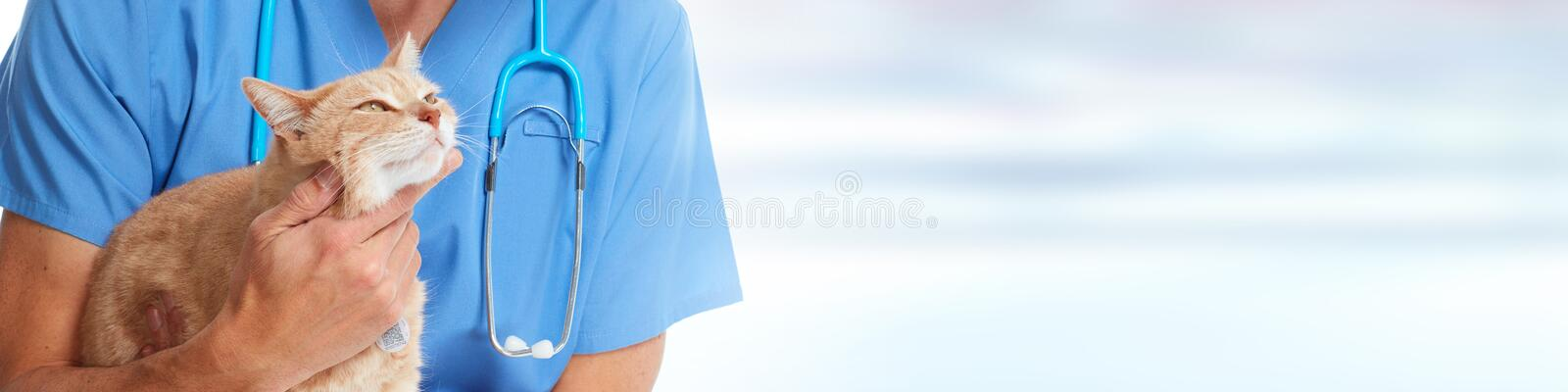 Doctor veterinarian with cat royalty free stock photos