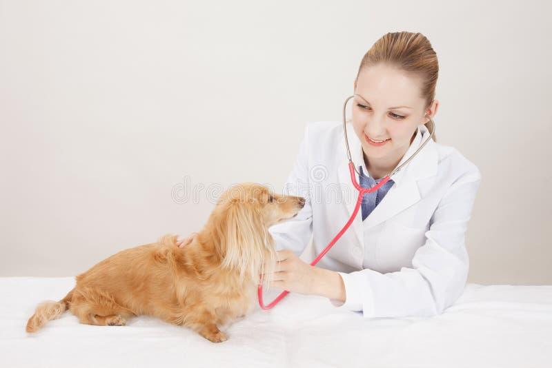 Doctor veterinario fotos de archivo