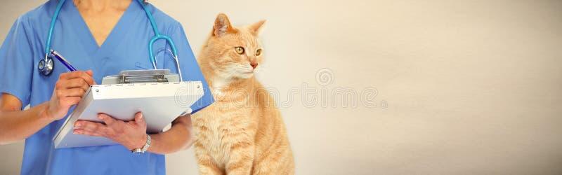 Doctor veterinario con el gato en clínica veterinaria fotografía de archivo