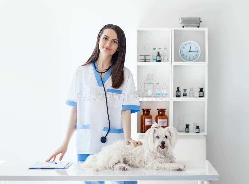 Doctor veterinario sonriente hermoso y perro blanco lindo en veterinario imagenes de archivo