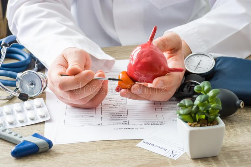 At doctors appointment physician shows to patient shape of prostate gland with focus on hand with organ. Scene explaining patient. Causes and localization of royalty free stock photos