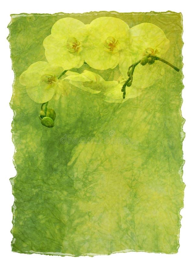 Documento di lettera con l'orchidea bianca illustrazione di stock