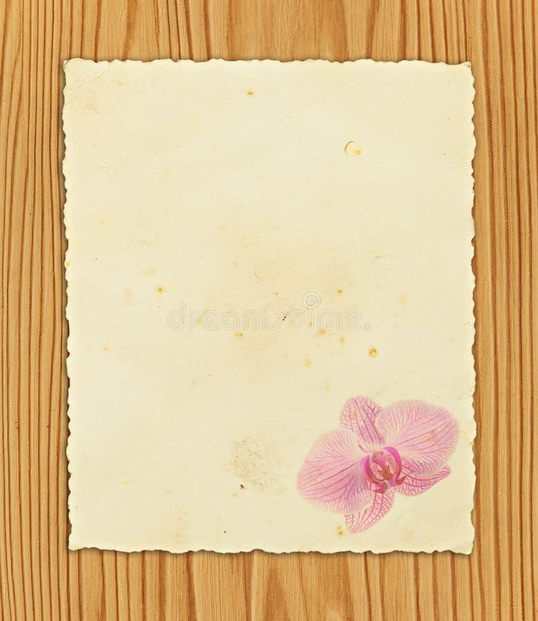 Documento su legno fotografia stock libera da diritti