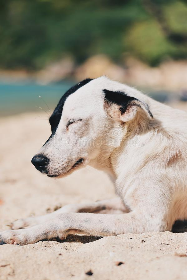 Dod que duerme en la playa imagen de archivo