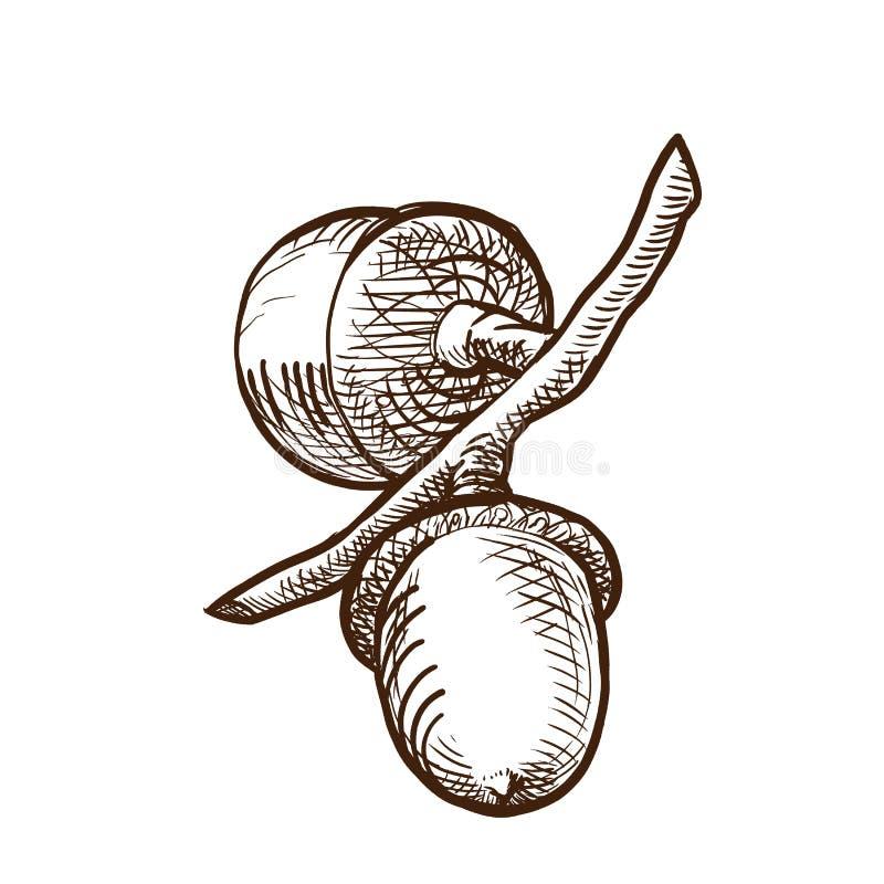8 dodatkowego eps formata ilustratora dębowy drzewo Gałąź roślina, z owoc w formularzowych acorns royalty ilustracja